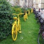 黄色い自転車並べ
